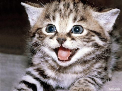 Tips Bersenang-Senang dg Kucing Untuk Redakan Stress